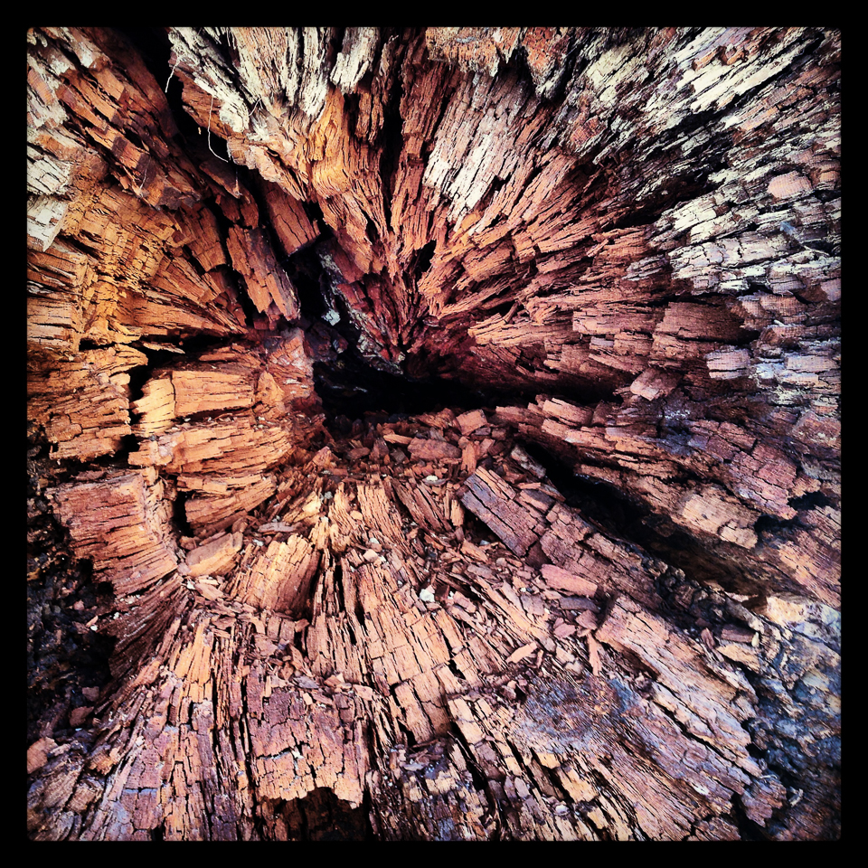 inside an oak tree